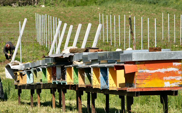 Bee hives in the Valley of Silence (Vicenza)